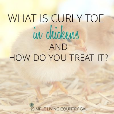 Learn what curly toe is, what causes it and how you can treat it at home safely.