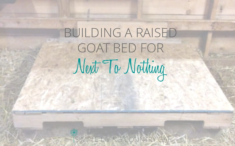 Building A Raised Goat Bed DIY