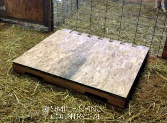 Use a pallet for a raised goat bed