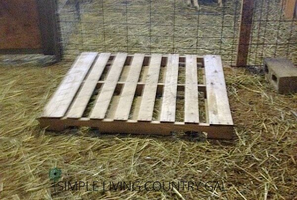 How to build a raised goat bed DIY