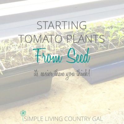 Read to find out how to start and grow your own tomato plants from seed...it's easier than you think!