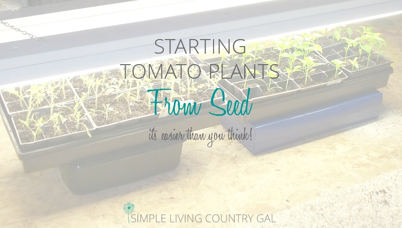 Starting Tomato Plants From Seed