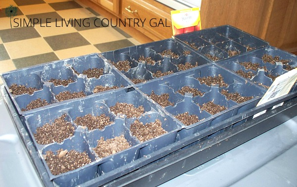 a fresh flat of seedlings for the backyard garden