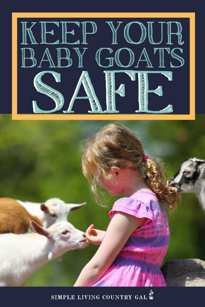 Keep your baby goats safe