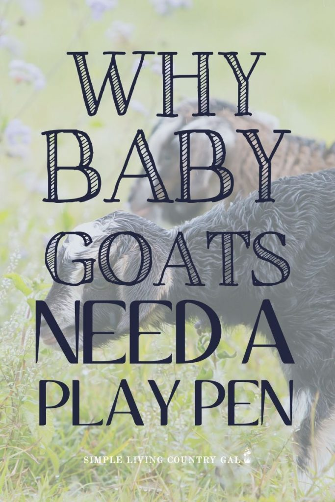 How to keep your baby goats safe. Baby goat care for beginners. What to do when you have baby goats. How to setup a baby goat pen. Having a goat kid pen is a great way to teach socialization, raise people friendly goats, and do healthy checks without nosey goat moms in the way. Follow these steps to set up a safe and secure area on your farm. #goatkids #goatkidpen #goats