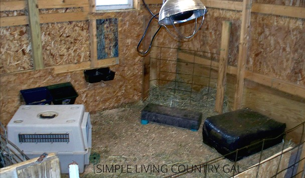 How to set up a good and safe DIY goat kid pen for your goat babies.