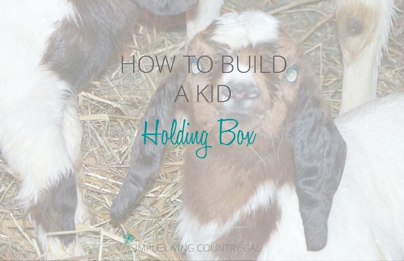 Building A Kid Holding Box