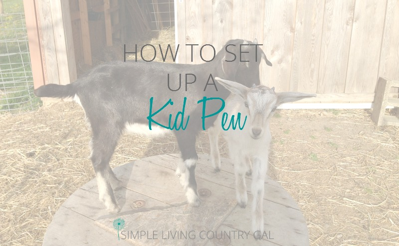 The importance of having a DIY goat kid pen