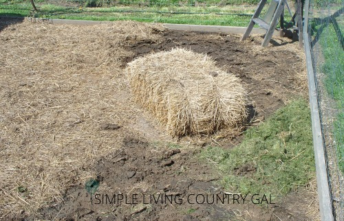 bale of straw in a coop. tips on how to keep chickens dry in a wet coop