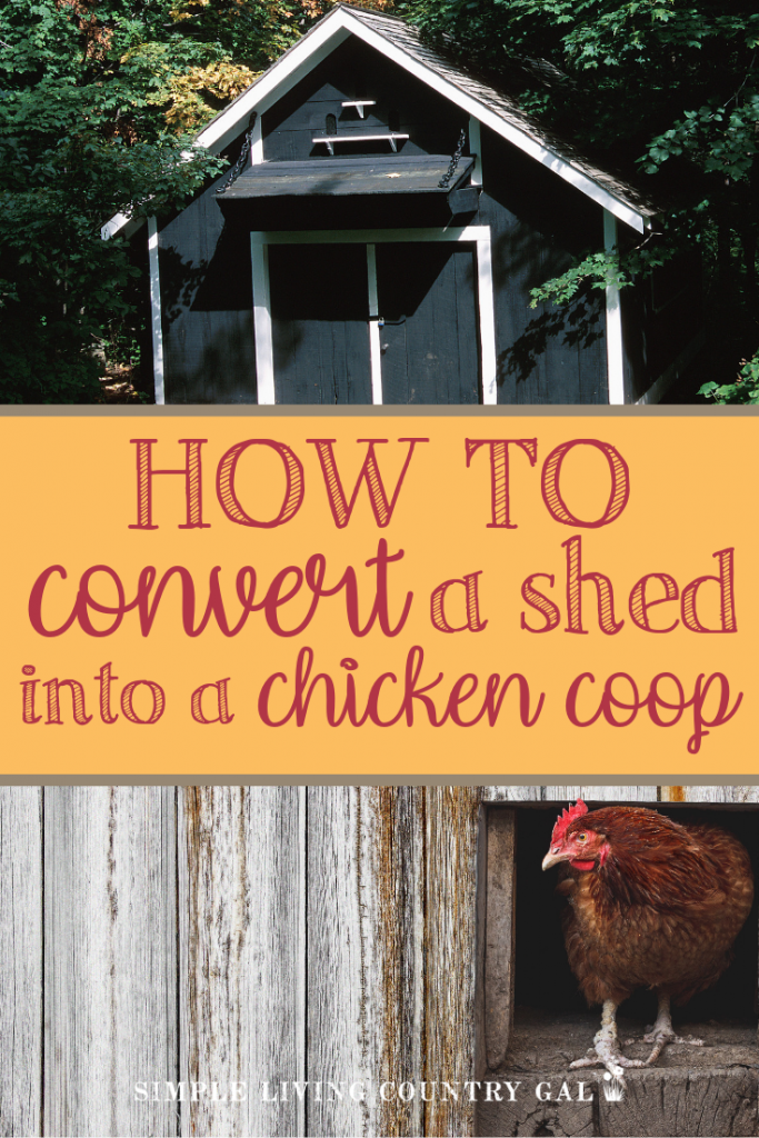 No coop for your new chickens? No problem! Your DIY guide on how to make use of what you have on hand. Save money and convert a shed into a full chicken coop. A step by step guide on setting up a coop for your hens. #raisingchickens #chickens #backyardchickens