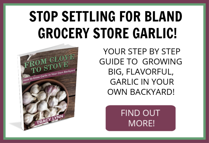 Love garlic but don't have a garden? No problem! This eBook will walk you through how to set up a small garden full of delicious and beautiful garlic! Quit buying those dull heads from the grocery store! Now you can have your own patch of garlic that you can use all season long. Super easy to grow, anyone can do it. Find out how! #growgarlic #gardening #garlic
