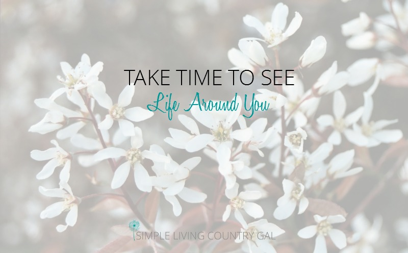 Take Time To See Your Life Around You