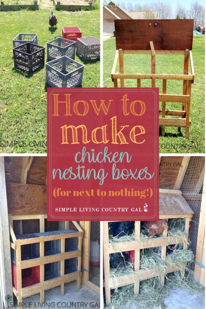 If you are looking for an inexpensive set up for your chickens then this DIY milk crate nesting box system might be for you. See how we made ours using materials from around our farm for next to nothing! DIY nesting boxes for homesteaders that anyone can make for little or no money. #chickens #backyardchickens #chickencoop #slcg