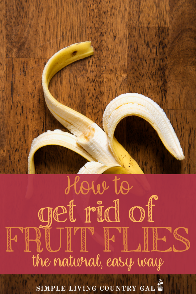 There is nothing worse than waking up to a kitchen full of fruit flies. How about a simple tip that will eliminate those pesky things fast? My foolproof hack will get rid of fruit flies by just using what you probably already have in your home. #fruitflies #fruit #kitchentip #homestead