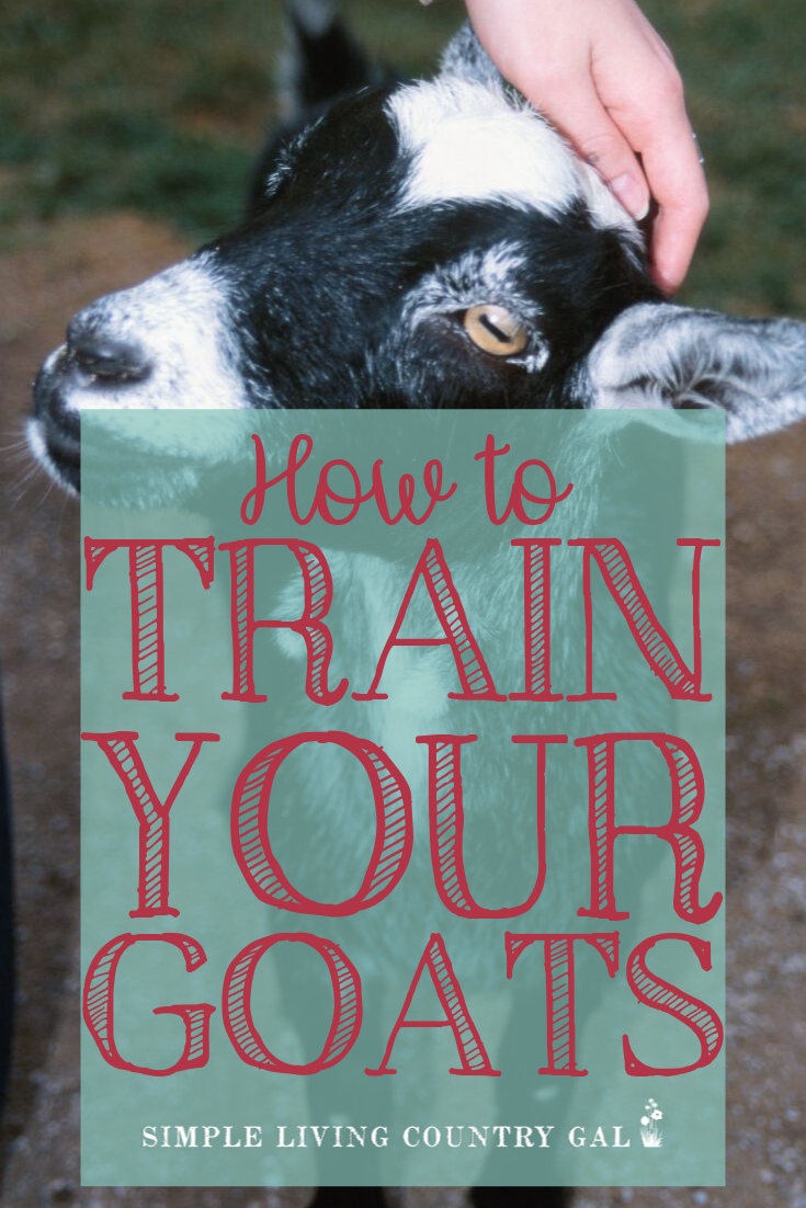 how to train your goats