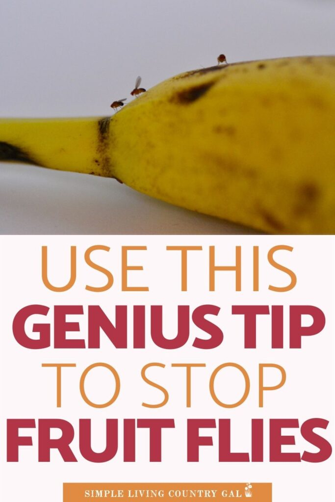 how to get rid of fruit flies overnight