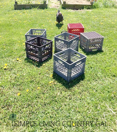 Milk crates used for nesting boxes drying in the warm spring sun. Cleaning out the chicken coop a step by step guide.