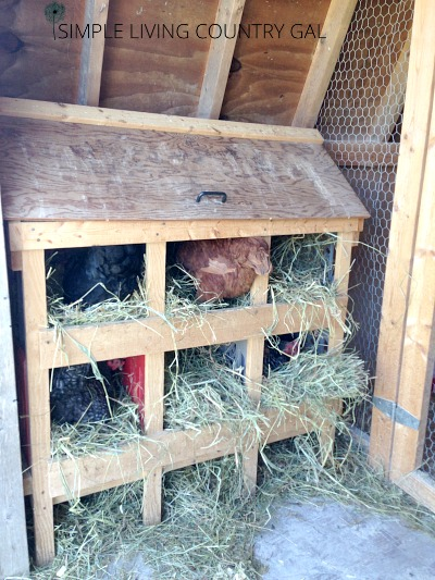 nesting boxes for laying hens