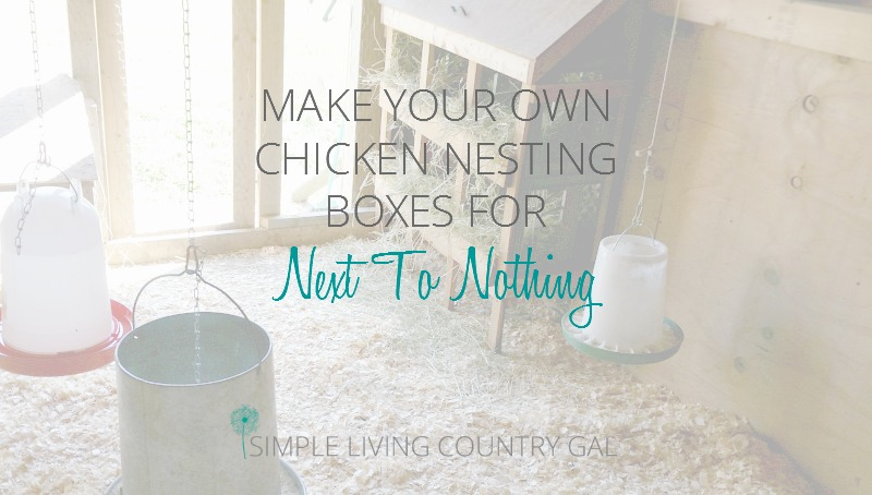 Building A Chicken Nesting Boxes