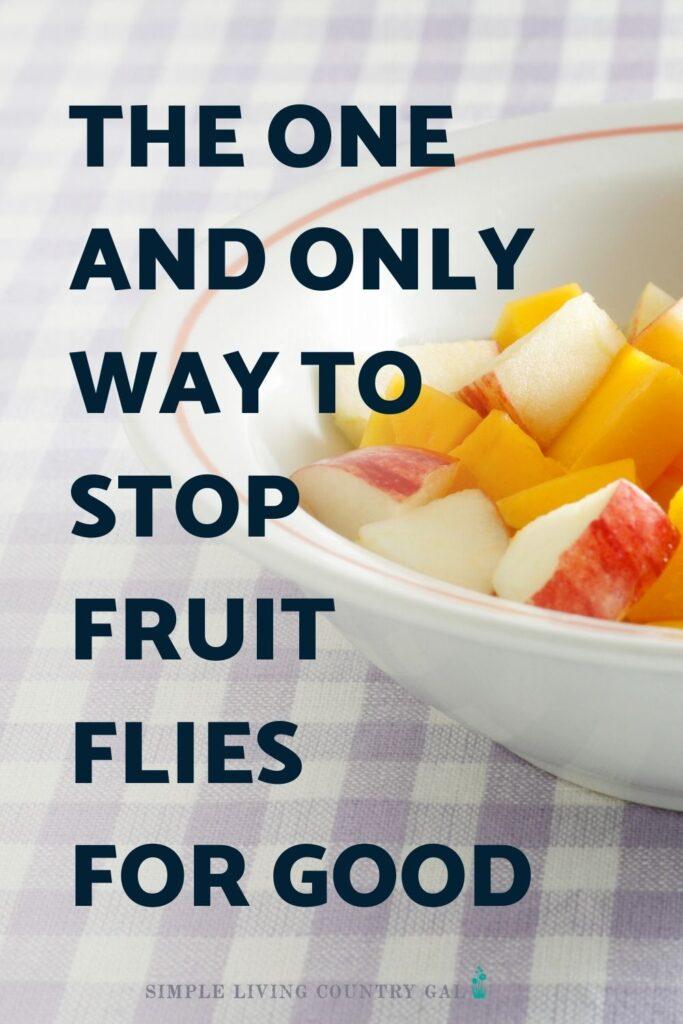 how to stop fruit flies naturally