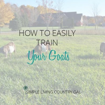 Not only is it easy to train your goats but necessary if you want chore time to be a breeze!