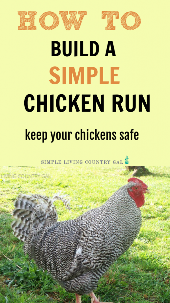 Whether you are brand new to raising chickens are have been at it a while, a safe and sturdy chicken run is important to have. Not only to keep your chickens in and out of your garden but also to keep predators out and your chickens safe. #chickens #chickencoop #slcg