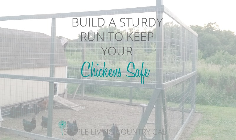 How to Build a Chicken Run to Keep Your Chickens Safe From Predators.