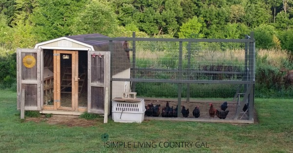 Full chicken coop and outer run.How to build a chicken run to not only to keep your chickens in and out of your garden but also to keep predators out and your chickens safe. #chickens #chickencoop #slcg