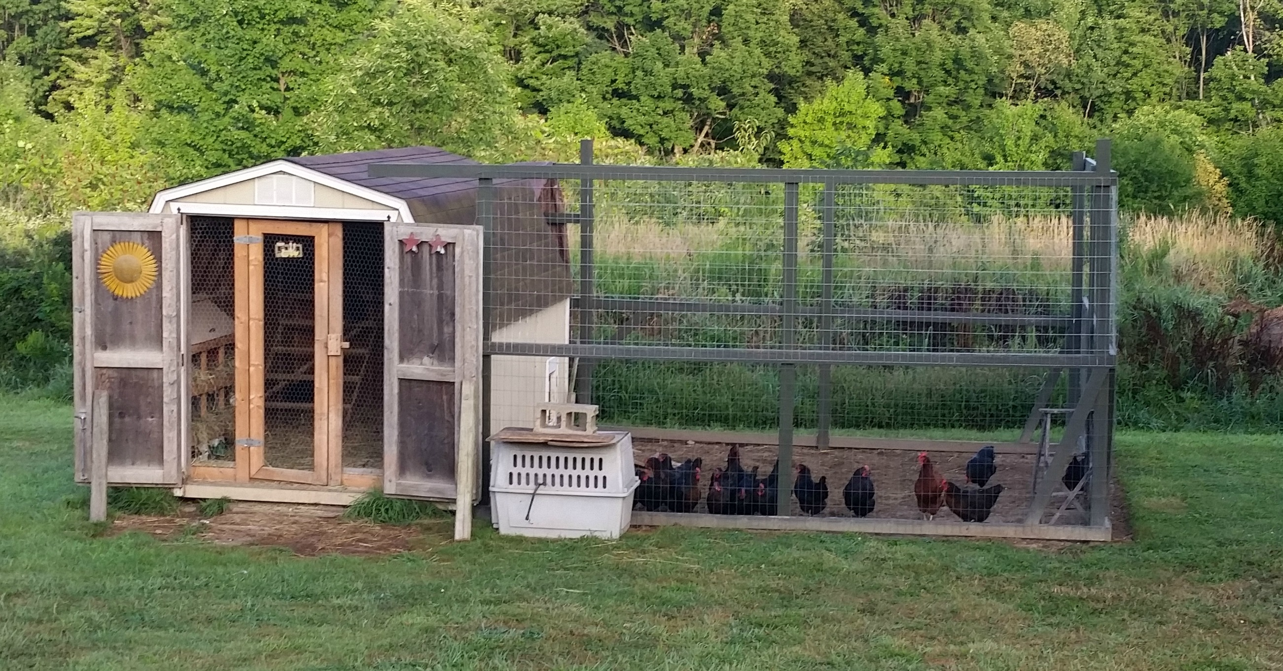 Converting A Shed Into A Chicken Coop Simple Living