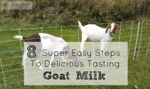 If you follow these 8 simple steps I promise your goat milk will taste delicious every time!