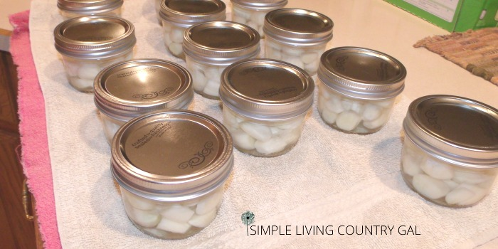 Jars of garlic cloves on a kitchen counter. how to preserve garlic cloves step by step