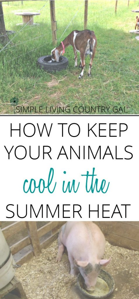 Nothing can affect your animals more that the heat of summer. Learn how to make it easier for them to cope and even flourish in the hot summer months.