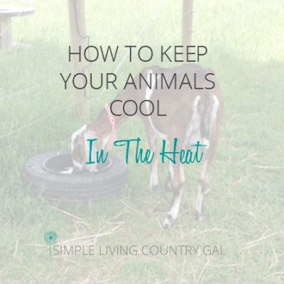 Ensuring animals remain cool in extreme heat is not only simple necessary. Learn how here!