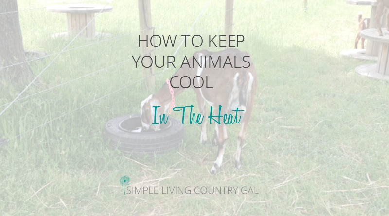 Keeping Animals Cool In Hot Weather