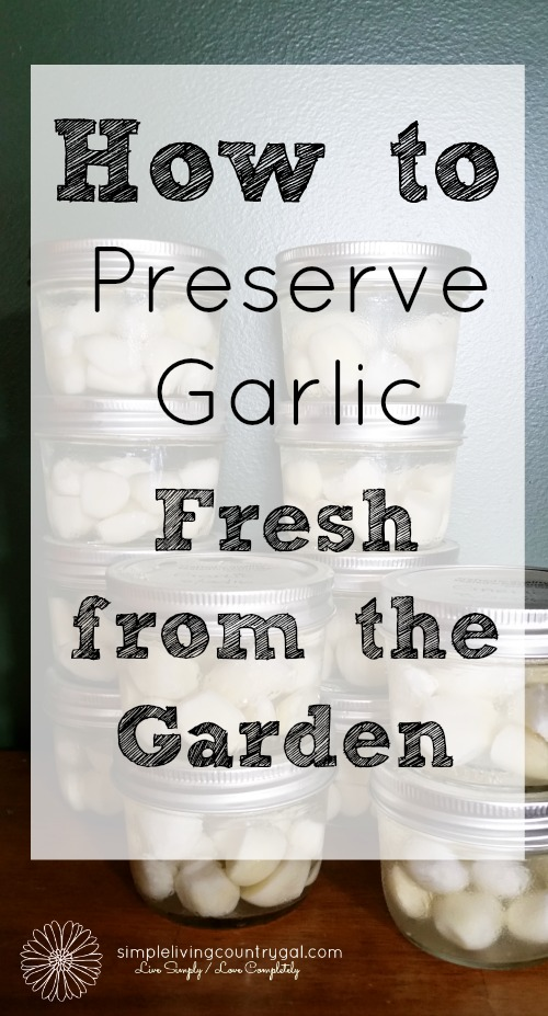 Enjoy fresh garlic year round with this easy step by step guide on how to preserve garlic cloves.
