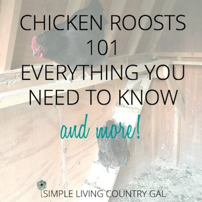 chicken roost 101 everything you need to know and more