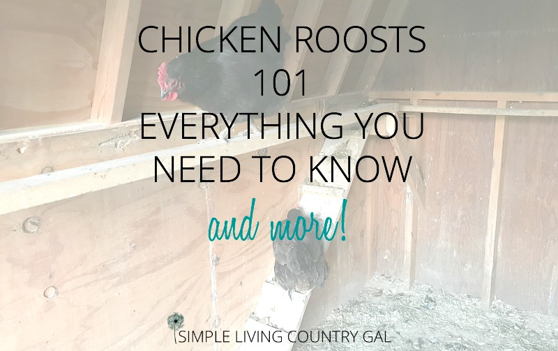 Everything You Need To Know About Chicken Roosts