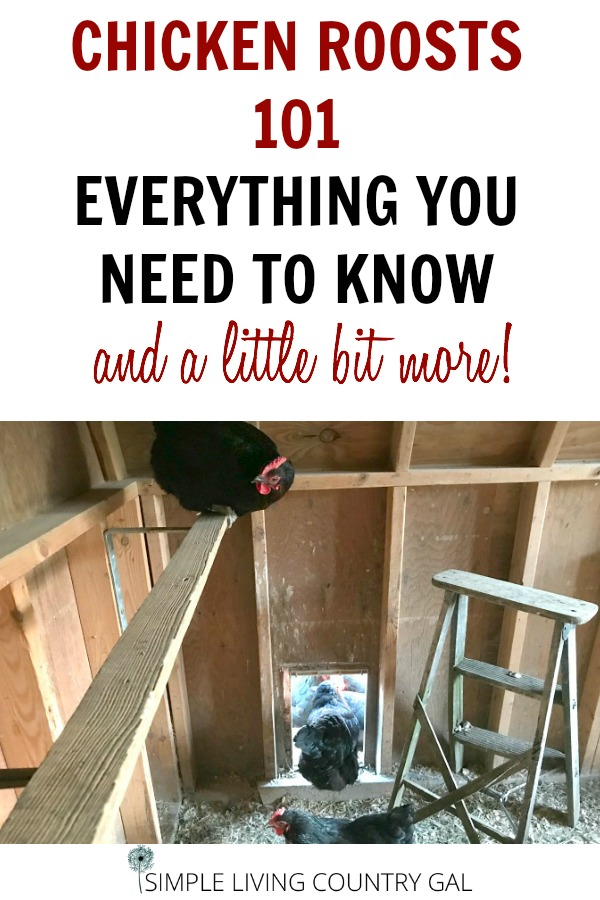 chicken up on a roost. How to build a chicken roost