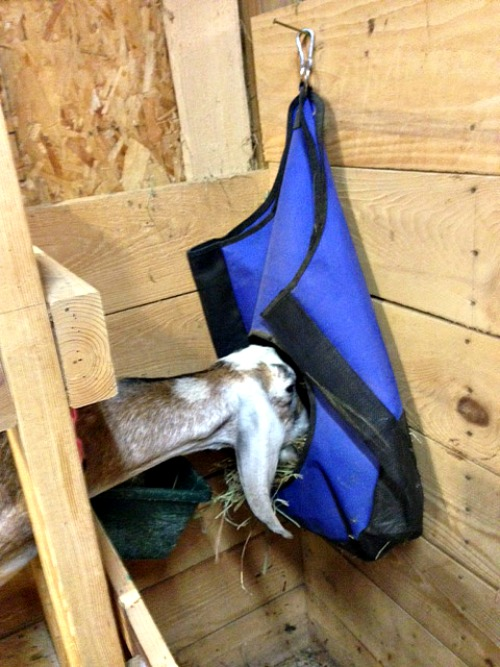 goat hay feeder