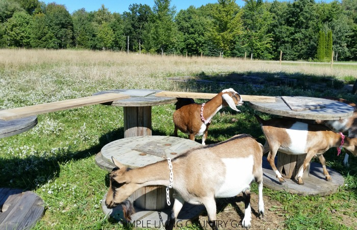 diy goat playground