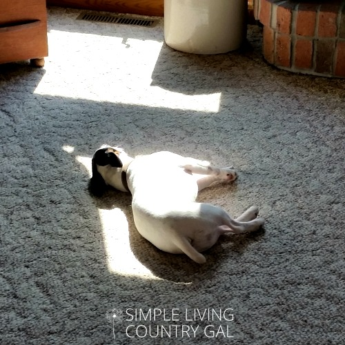 use the sun to warm your home...and your puppy!