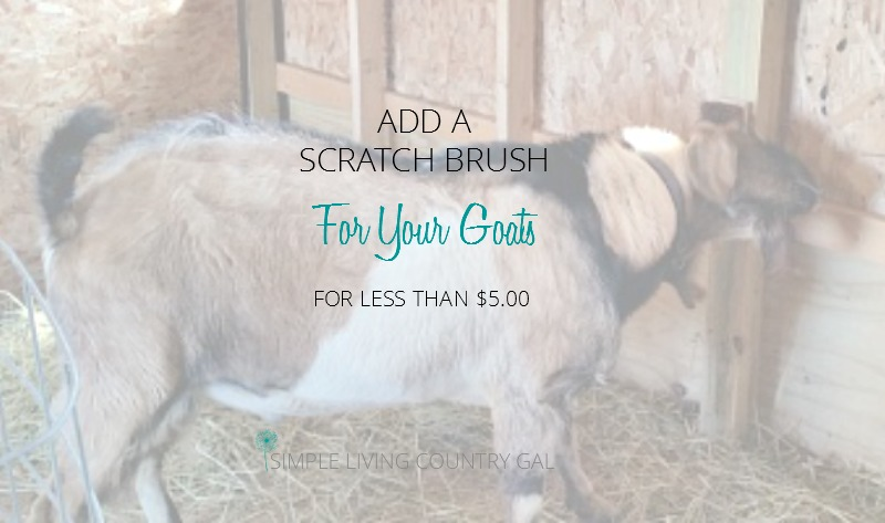 Super Simple DIY Scratch Brush for your Goats