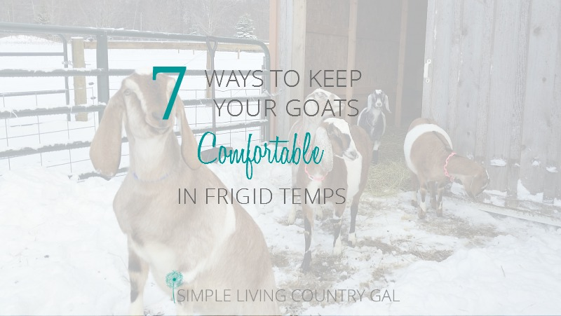 How To Help Your Goats Cope With Winter