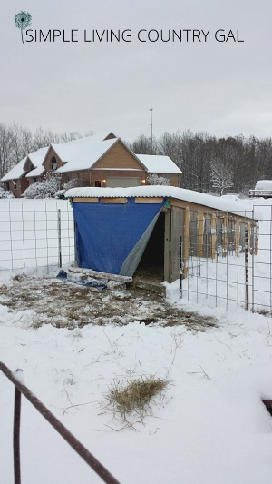 goat shelter in the winter