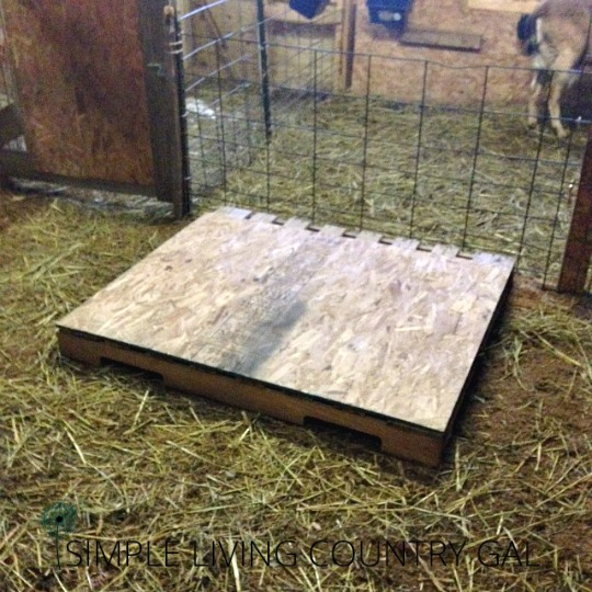 raised bed to help goats cope with winter