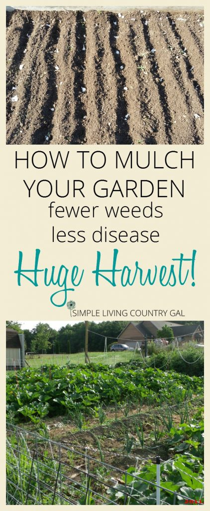 Mulching your garden. If you love to garden but hate to weed, then this post is for you. My super simple and incredibly effective tip that will keep you out of your garden and off your needs this growing season. #garden #gardentips #gardeningforbeginners #slcg