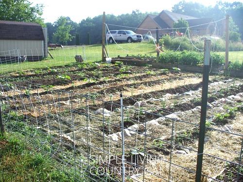garden mulching diy