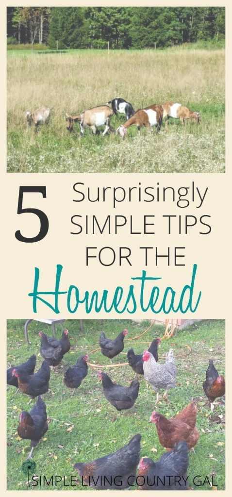 5 Simple tips for the homestead and garden. These tips will save you time and money.