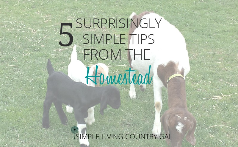 5 Surprisingly Simple Tips From The Homestead