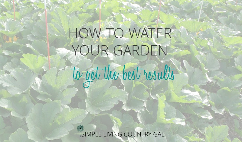 How To Water Your Garden To Get The Best Results